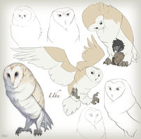 Mother Owl by WhiteFoxCub