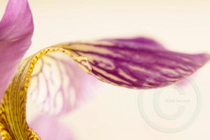 Purple Bokeh I by ninazdesign