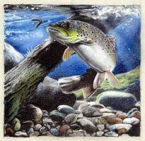 Trout by fowlj