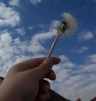 make a wish by millie369