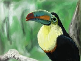 Toucan by mkmars