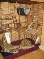 The rat cage^^ by OP-Girl16