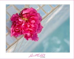 Recovery Rose by lamst-ebda3