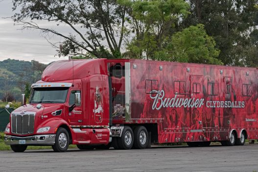 Budweiser Clydesdale truck by NBrownPhotography