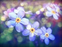 forget-me-not-2009 by aceofhearts01
