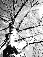 The black and white tree by Vippu