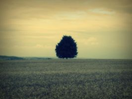 Strom v poli - A tree in the field by Melops1ttacus