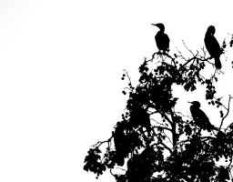 Cormorans and the white by molecularlight