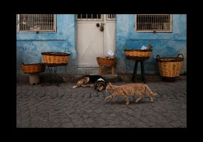 Cat and Dog... 2012_07 by ErkanKalenderli