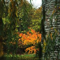 Autumnal Fire Through Willow by EarthHart