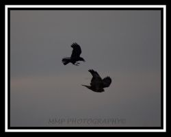 On Guard...........Crows by 001mark