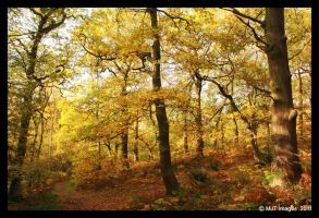 Swithland Woods 5 by MichaelJTopley