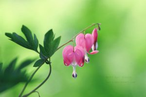 Bleeding Hearts 3 by Karl-B