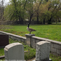 Perched graveyard goose by seeker-of-revelation
