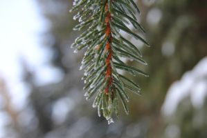 Spruce by michael160693
