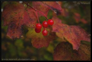 Of Beautiful Reds by Miarath