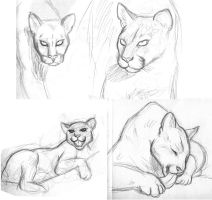 Just some Cougars by Marvelousboy