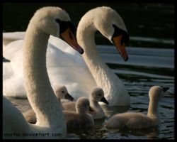 swan family by morho