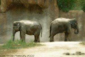 Asian Elephant by BohemianHarlot