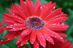 Raindrops by Meyby