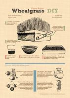 Infographics - Wheatgrass by VictorPaiam