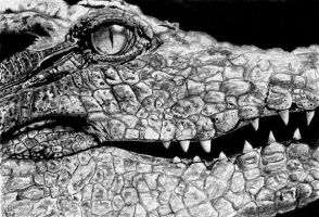 Romantic crocodile by MOHAART