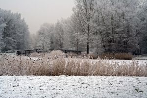 winterland 43 by priesteres-stock