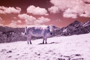 Infrared 8 - Milka by st1hart
