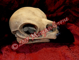 Large Crow Skull Sculpture by MorganCrone