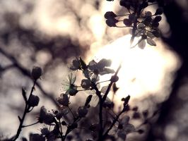 spring the second. by visual-sick