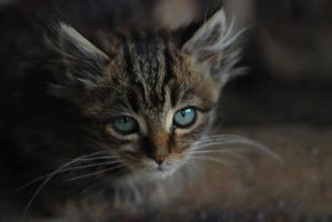 I Like Kity Cats by L-Frederic