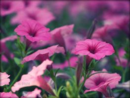 Every flower is a soul blossoming in nature. by ahley