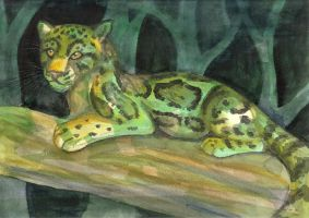 Clouded Leopard by CaptainMorwen
