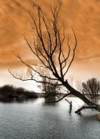Orange sky... by jeremi12
