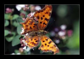 comma by 21711