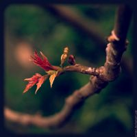 A little bit of life. by Erinti