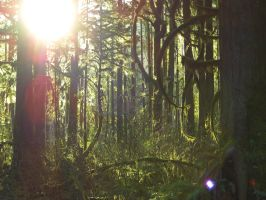 Sun Through the Trees by scarlettrenee