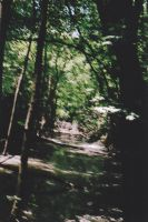 blurred river forest by thePARANOIDghost