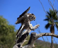 Great Horned Owl 9231 by mammothhunter