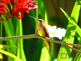 Humming Bird With Flower by wolfwings1