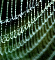 Dew Curtain by malavy