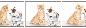 Kitty-mart 05 by hoschie