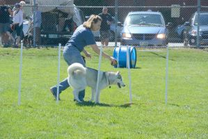 2014 Dog Festival, Agility Contest 7 by Miss-Tbones