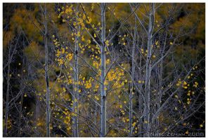 Fading Fall by Nate-Zeman