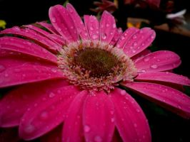 Pink Raindrops by SummerStar367