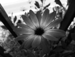 Turn into a black flower by Silthria