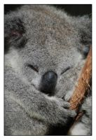 Sleepy Little Koala by The-name1ess