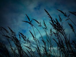 Tall Grass by rabbitica