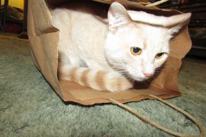 Cat in the Bag by To-be-the-happy-one