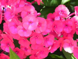 Color of Flowers_07 by ToenWraith